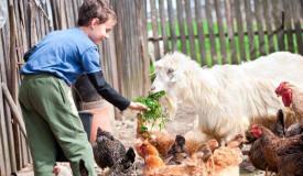 Inmersión en familia en granjas